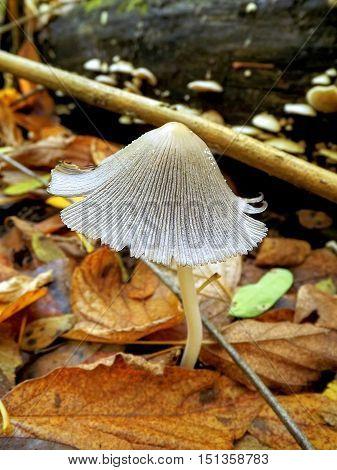 Autumn forest and beautiful vegetation. Trim beautiful autumn view of mushrooms