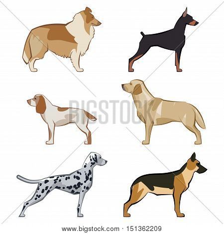 Dogs set of colorful icons and illustrations