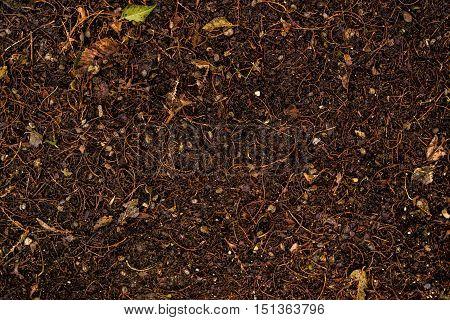 Soil, ground, wet soil texture, wet ground, dry grass on the ground