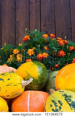 Pile of pumpkins that is in front of the flowerbed with marigolds that is in front of the wooden fence.
