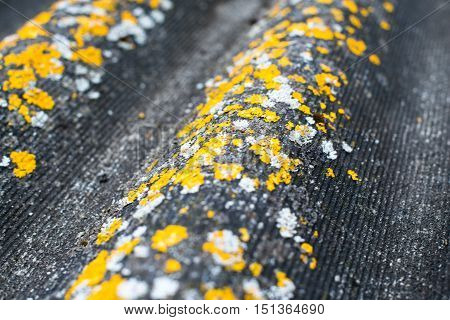 Old wavy roofing slate covered with yellow and white lichen