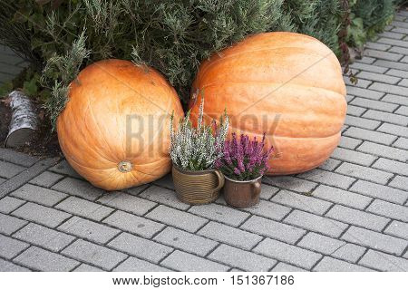 Autumn decoration with pumpkin and heather on the sidewalk