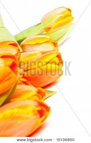 Bunch Of Yellow Orange Tulips Isolated On White