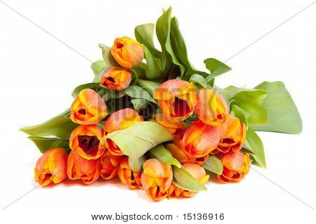 Yellow Orange Tulips Isolated On White Background