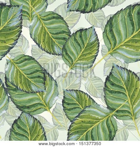 Wildflower leaf pattern in a watercolor style isolated. Aquarelle wild flower for background, texture, wrapper pattern, frame or border.