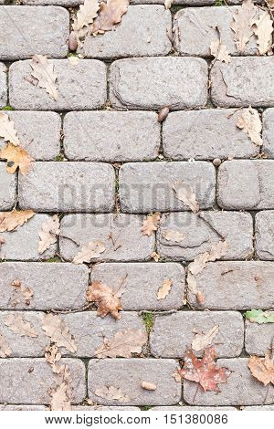 Top view on sidewalk tiles with dry autumn leaves.