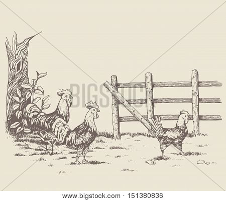 Rooster and hen at the farm. Countryside. Beautiful nature. The tree with leaves, next to the fence, near the roosters running around. Two cock looking at chicken with love.