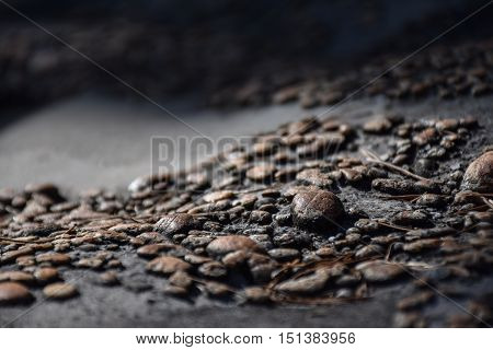Macro view of small brown pebbles on a rock with dry pine needles lying around