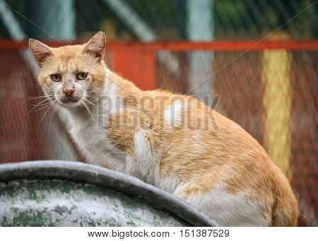 Hungry street cat on a dumpster looking for food