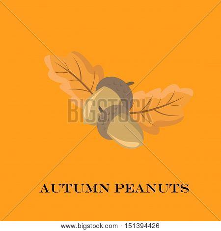Autumn Peanuts On Yellow Background. Vector Illustration.