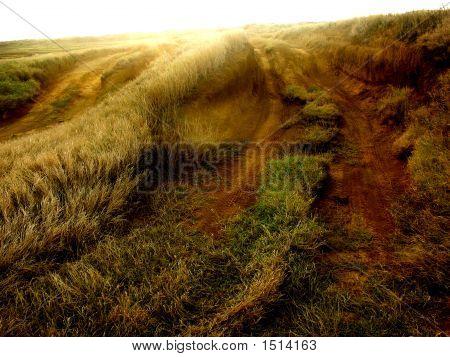 Tracks On A Sunlit Plain