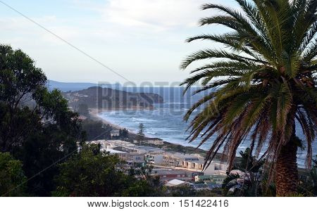 Narrabeen beach from Collaroy Plateau (Sydney NSW Australia). Palm Tree in the foreground.