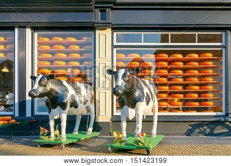 Delft, The Netherlands - August 30, 2016: Sculptures of cows in front of a showcase shop selling the famous Dutch cheese. Dutch cheese is an important export product in the Netherlands.