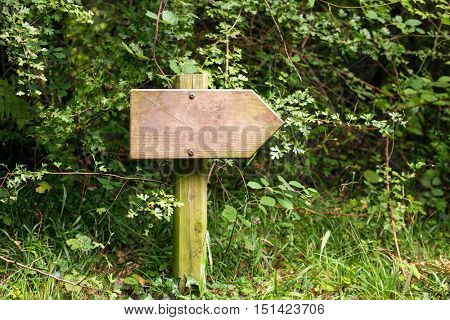 Wooden signpost in forest