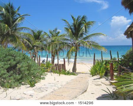 Walk Path To A Tropical White Beach And Blue Sea, Tulum, Mexico