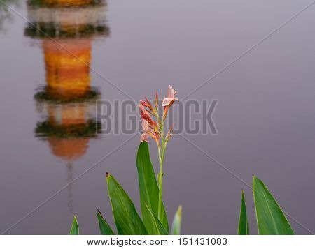 The pink flower in front of the lake in the garden.