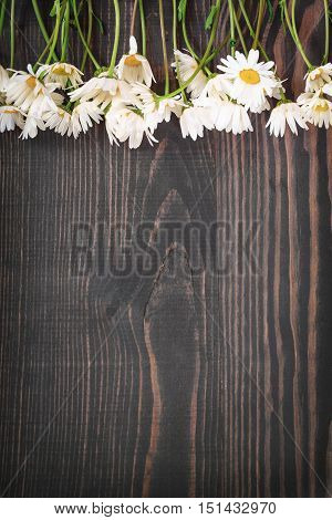 Daisy chamomile flowers on wooden background. Top view with copy space.