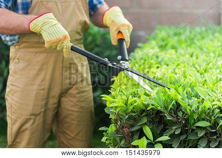 Closeup of a Gardener Using a Manual Hedge Trimmer