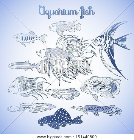 Graphic aquarium fishes drawn in line art style. Under water scenery isolated on the white background in blue colors.
