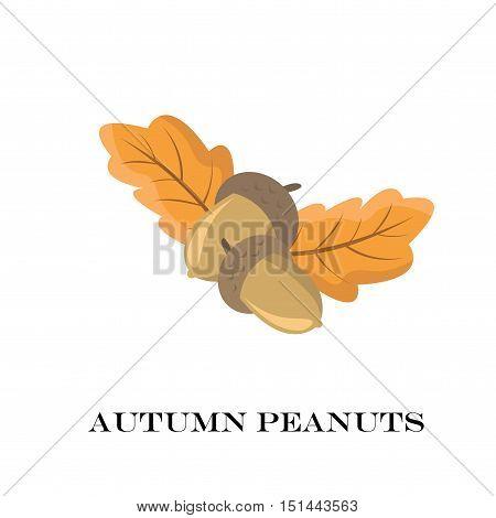 Autumn Peanuts On White Background. Vector Illustration.
