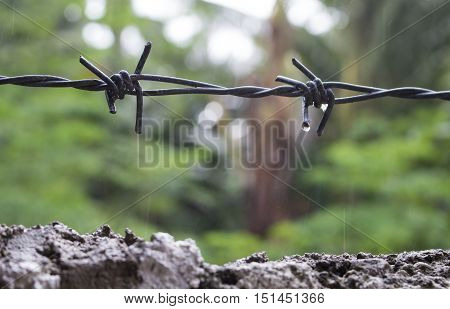 Barbed wire under the rain. Water drops on sharp wire knots. Closeup photo of garden fence protecting property from forest. Concrete wall with black wire border. House boundaries concept image