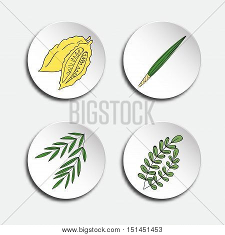 Four species for Jewish Holiday Sukkot: palm branch, willow and myrtle leaves, yellow etrog. Icons set. Vector illustration.