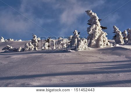 Buried in snow forest in the Giant Mountains in Poland