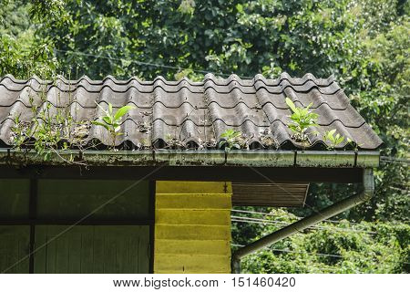 Trees on roofs, when you don't clean your rain gutters.