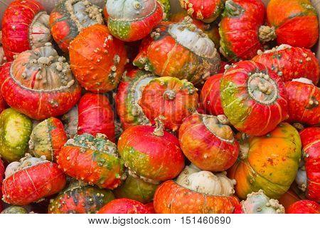 Many red pumpkins Sorts hats pumpkin or Bishop's Hat Pumpkins