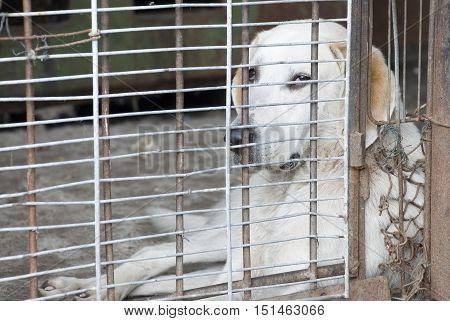 Sad dog in a cage looking sad