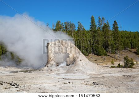 Tower geyser in the Yellowstone national park, USA