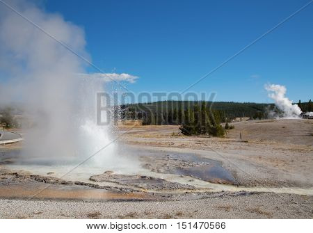 Sawmill geyser eruption in the Yellowstone national park, USA