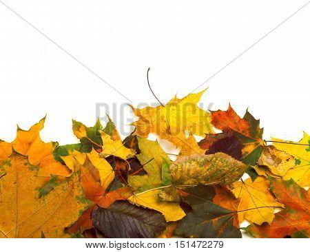 Autumn Dried Multicolor Leafs
