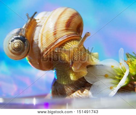 a small snail on more biggest snail