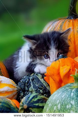 Kitty cat in a color pumpkin look