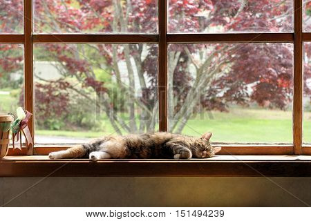 Content and comfy older cat sleeping soundly on the window sill of a large bay window.