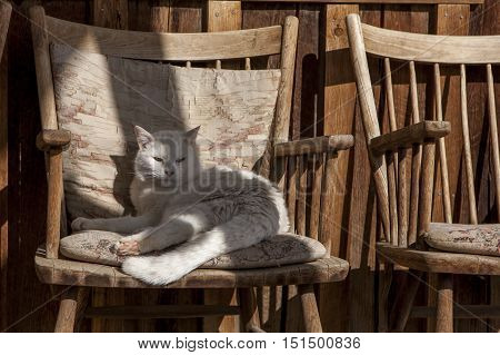 Cat lounges in a wooden chair. A cat relaxes on a cushion in a wooden chair near Winthrop Washington.