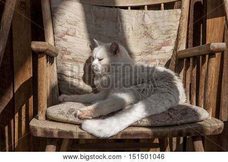 Comfy cat in chair. A cat relaxes on a cushion in a wooden chair near Winthrop Washington.