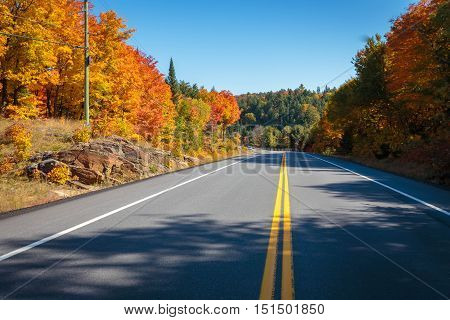 A straight road with fall trees on the sides