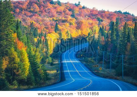 A curvy road with fall trees on the sides