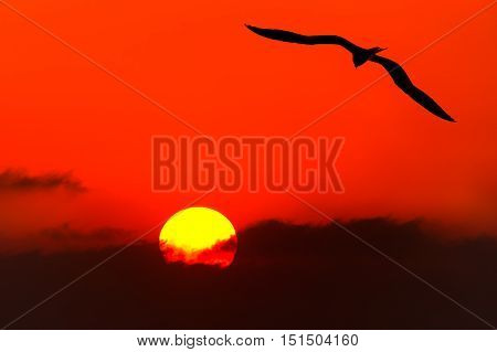 Bird silhouette flying is a single soul soaring against a bright red sunset sky on a spiritual journey towards the unknown.