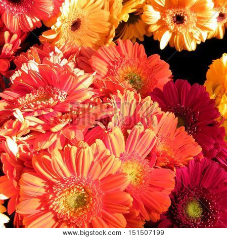 The aster flower on bazaar in Tel Aviv IsraelJanuary 7 2011