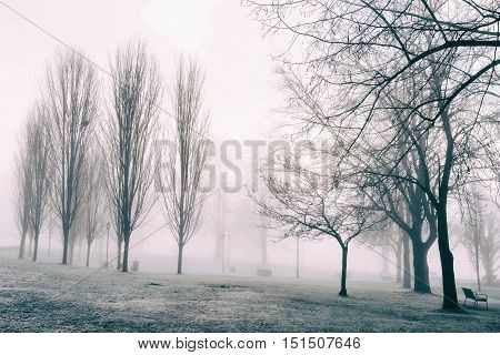 Winter fog made this popular park empty and desolate