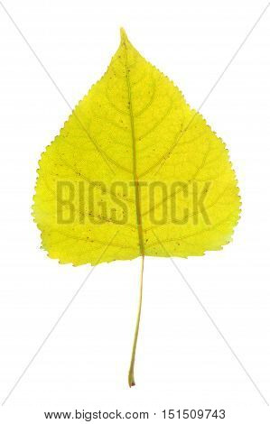 close up on single yellow leaf with leaf vein texture