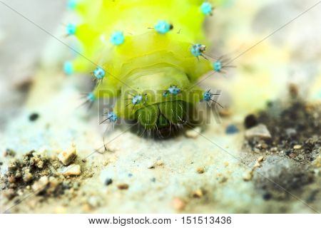 Worm, caterpillars, insects, insect macro nature the background blur