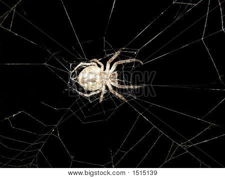 Terrible Spider
