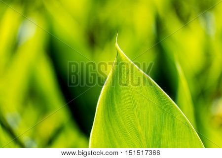 Green leaf texture, Selective focus, nature scene.