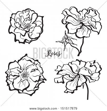 Set of rose flower vectors in black and white. Floral design elements.