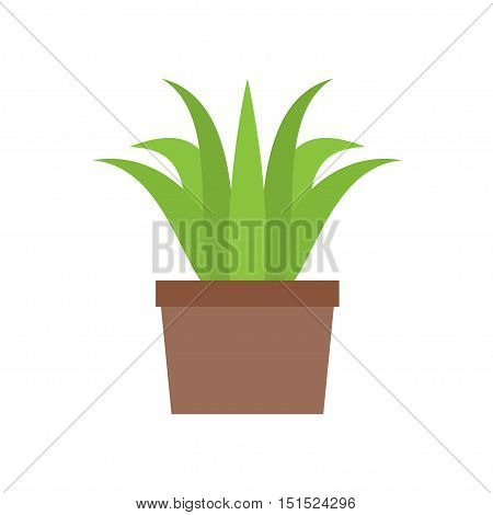Indoor green plant in a pot on a white background. Vector illustration