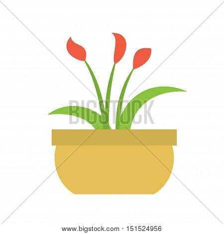 The indoor flower plant in a pot on a white background. Vector illustration